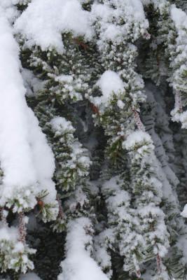 Vinter-1040896